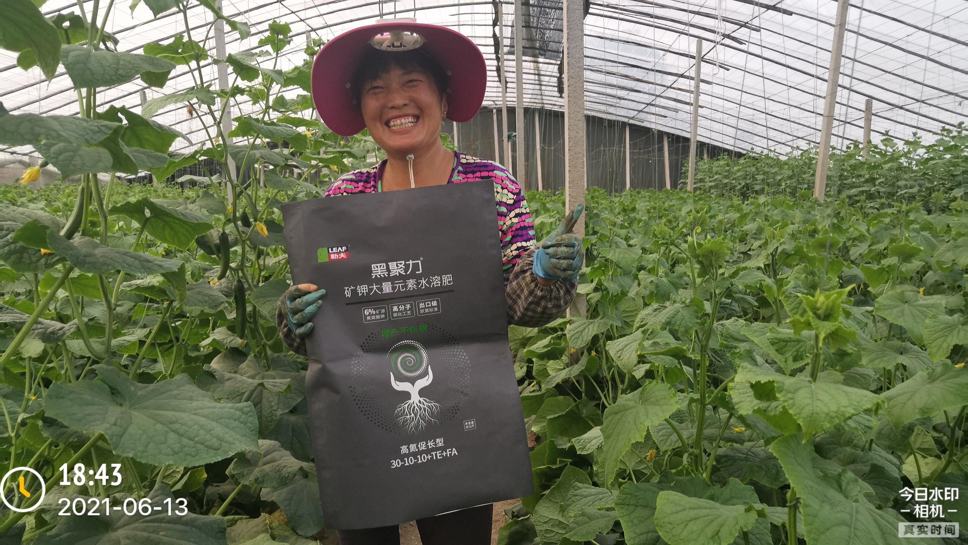 黃瓜下瓜期難管理怎么辦?看看山東壽光的農戶是怎么做的?