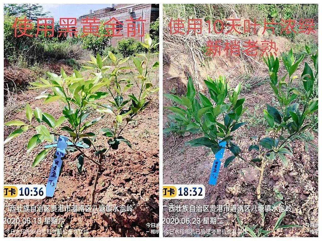 果樹沖施肥用那個品牌比較好?柑橘膨果期該用什么肥?